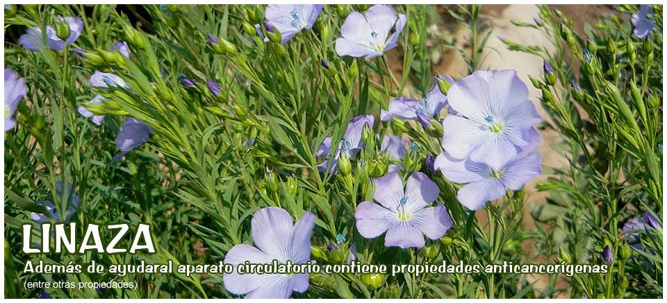 Clinica naturista bio natural n d sadhak godoy for Plantas medicinales y ornamentales